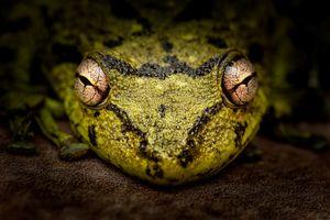 Фото бесплатно лягушка, макро, глаза
