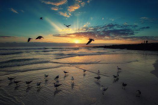 Чайки на берегу Майами · бесплатное фото