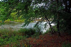 Бесплатные фото река,лес,деревья,природа