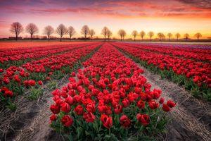 Бесплатные фото закат,поле,цветы,маки,пейзаж