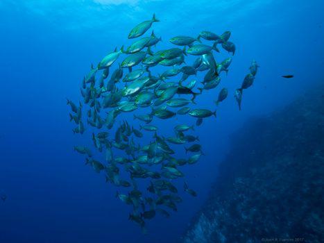 Фото бесплатно Bajo de Dentro, Морской заповедник Кабо де Палос, море