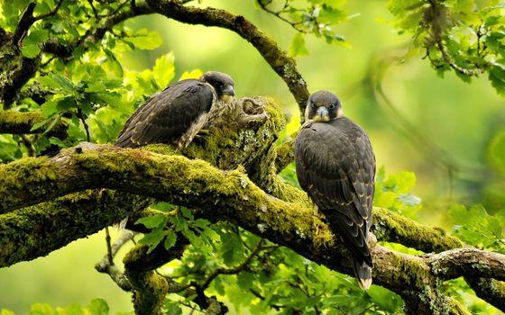 Фото бесплатно орел, хищная птица, ветвь