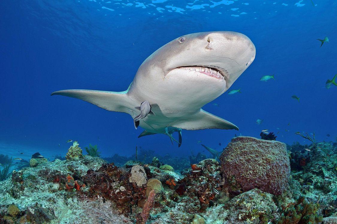 Красивые картинки море, акулы скачать бесплатно
