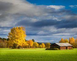 Фото бесплатно пейзаж, небо, деревья
