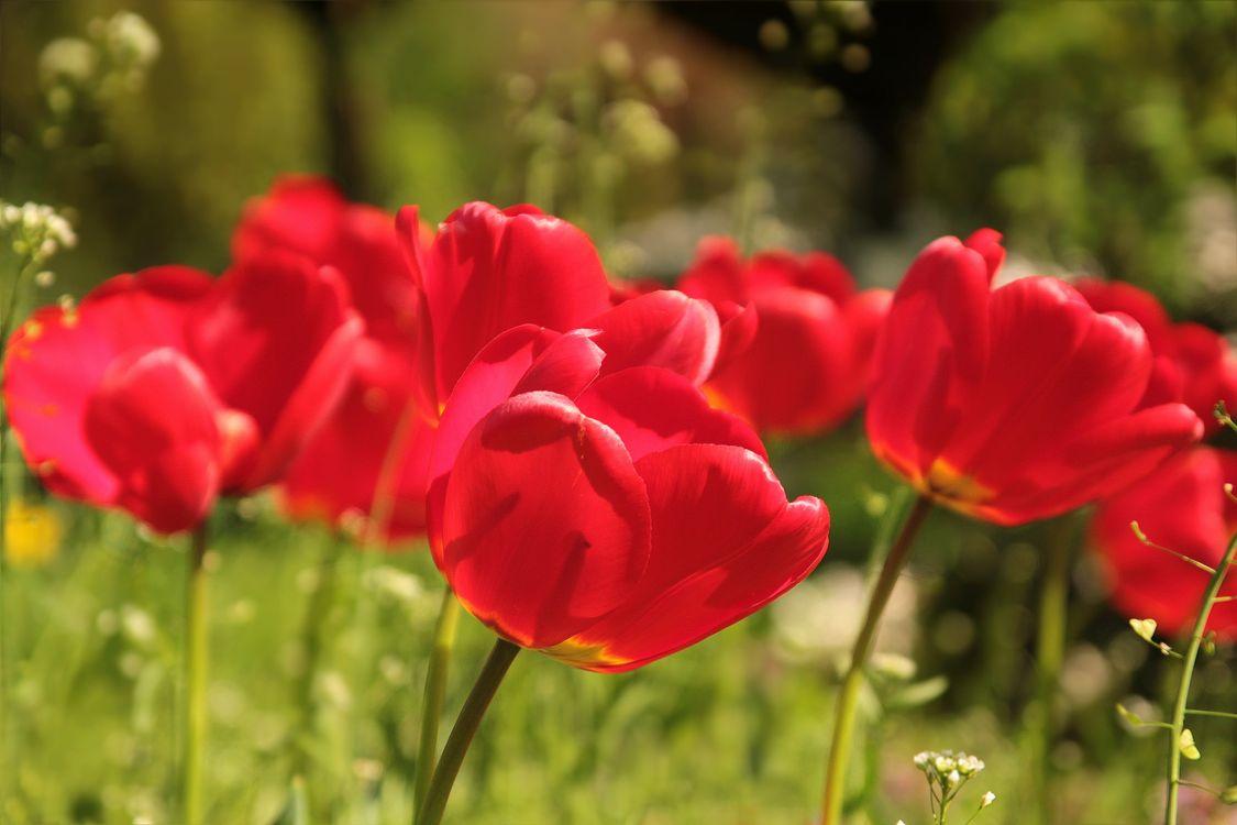 Фото весна цветок флора - бесплатные картинки на Fonwall