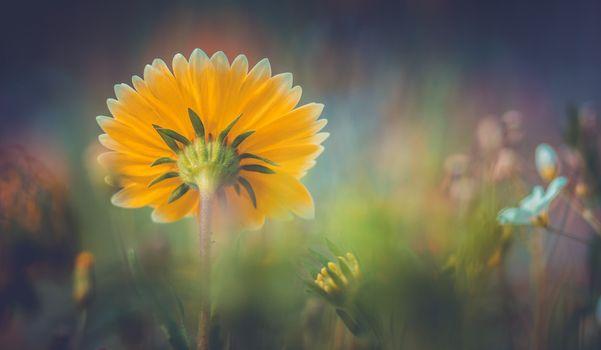 Фото бесплатно желтый, глубина резкости, природа