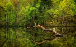 Photo free pond, lake, forest