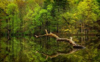 Заставки водоём, озеро, лес