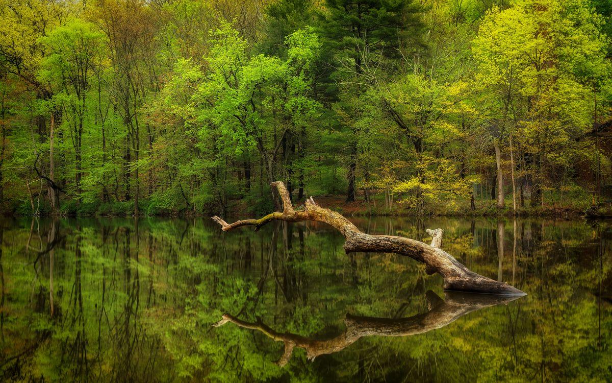 Обои водоём, озеро, лес картинки на телефон