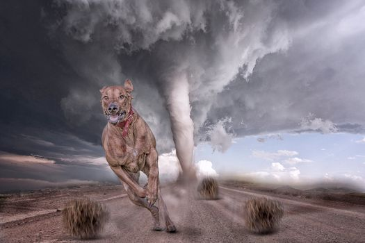 Photo free road, dog, tornado