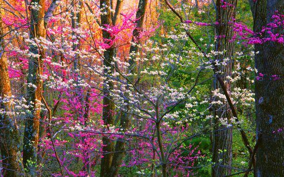 Фото бесплатно природа, лес, весна