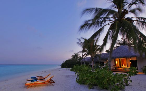 Фото бесплатно тропический остров, пальмы, праздник