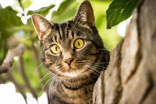 Косоглазый кот на дереве · бесплатное фото