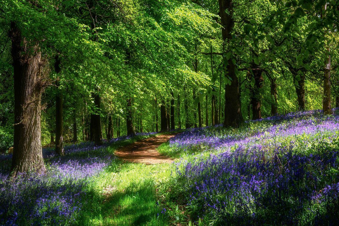 Фото бесплатно цветы, лес, тропинка - на рабочий стол