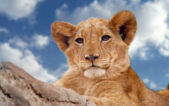Photo free lion, animals, predator