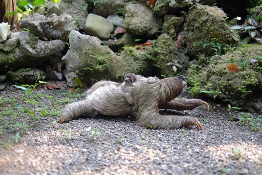 Фото бесплатно животные, джунгли, природа