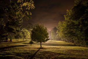 Бесплатные фото поле,деревья,ночь,свет,парк,пейзаж