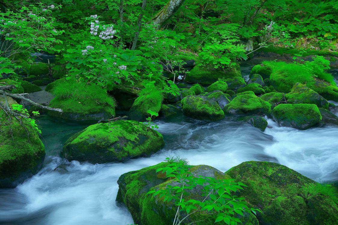 Фото бесплатно река, лес, деревья, камни, природа - на рабочий стол