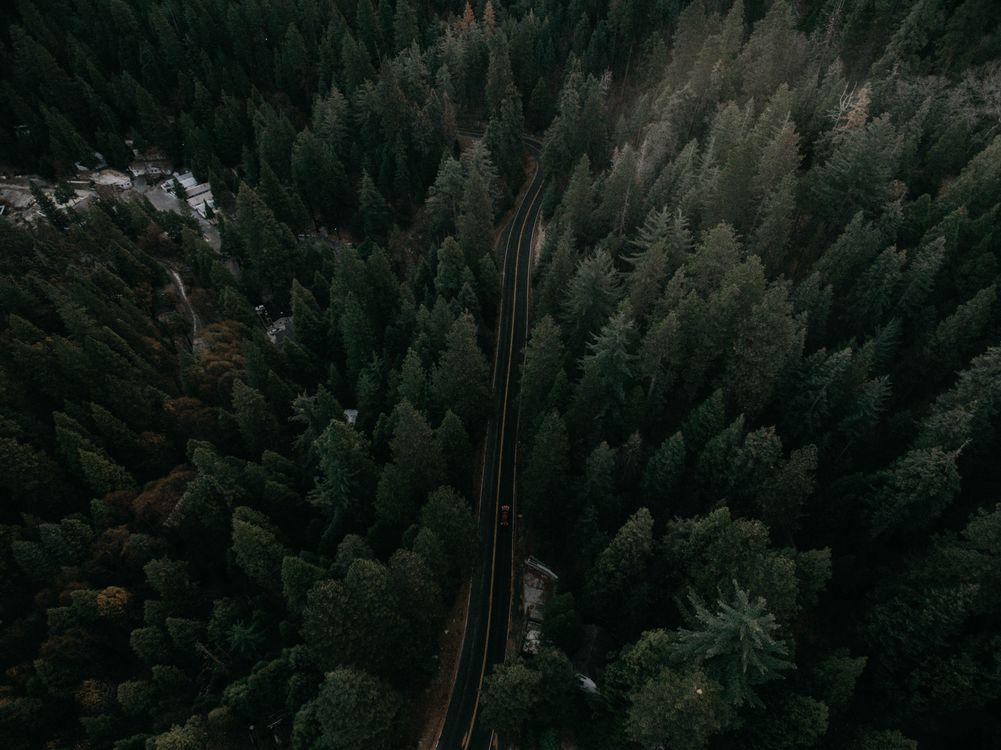 Фото бесплатно Вид сверху, деревья, авто - на рабочий стол