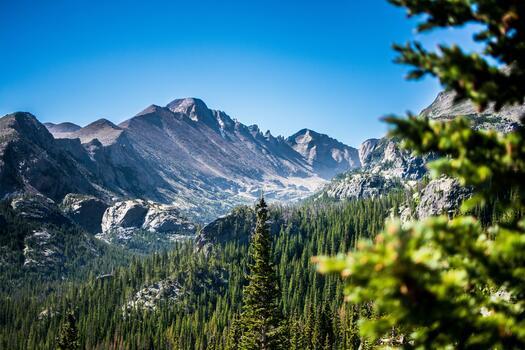 Photo free ridge, coniferous tree, pine family