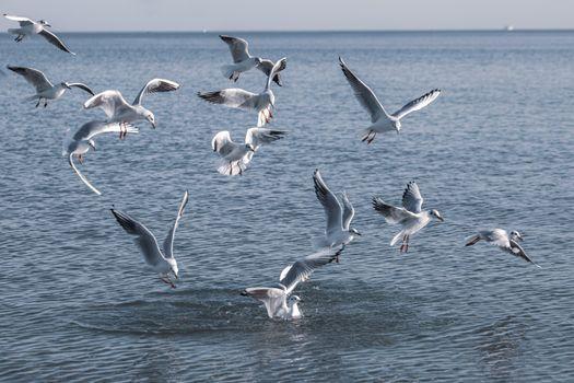 Photo free seagull, bird, many