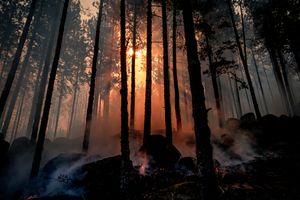 Фото бесплатно лес, пожар, солнце