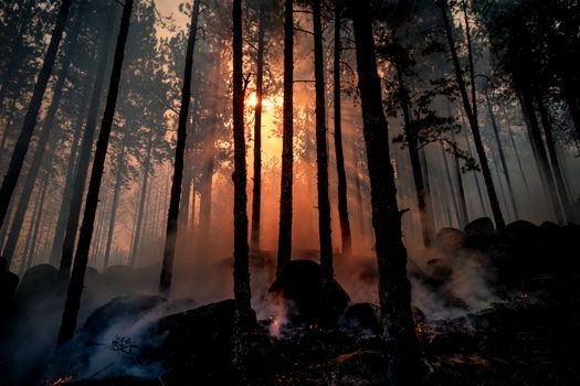 Photo free forest, fire, sun