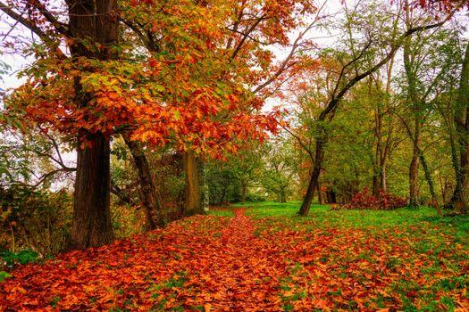 Фото бесплатно природа, лист, дуб