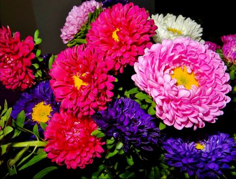 Photo free Asters, flowers, bouquet