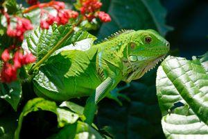 Фото бесплатно листья, животные, ящерица