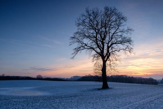 Photo free landscape, lone tree, sunset