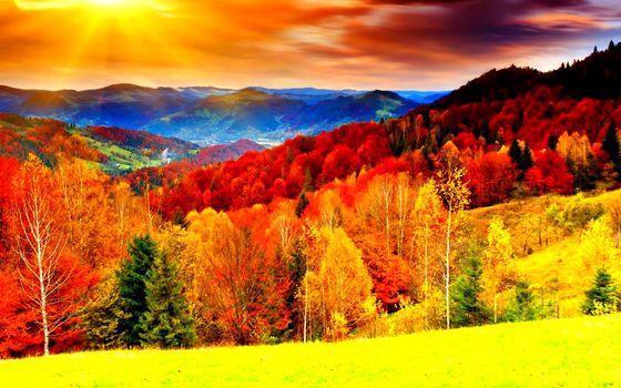 Красочный осенний лес