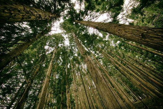 Фото бесплатно лето, древесные стволы, натуральный