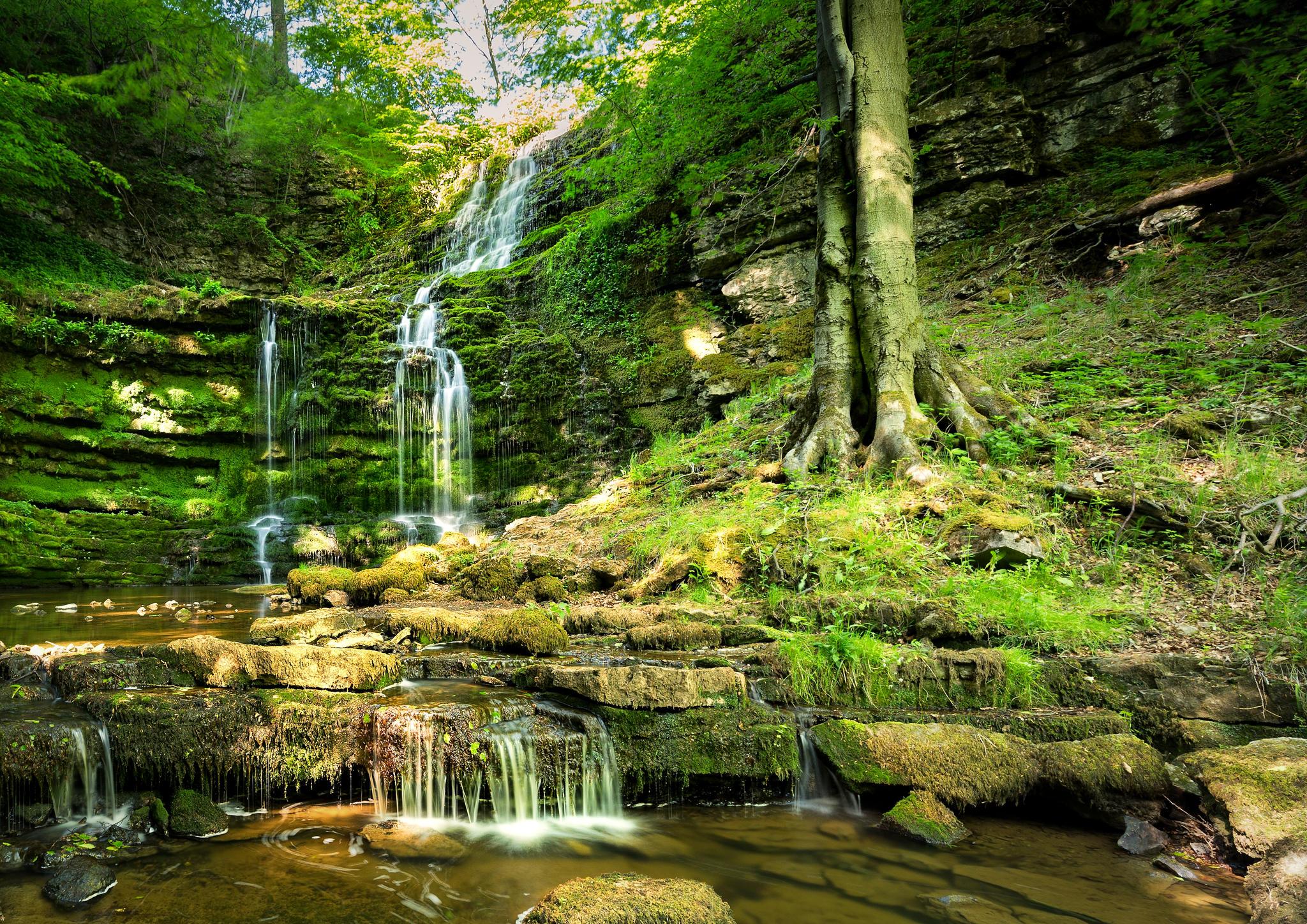 Обои лес, деревья, скалы, камни