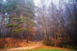Заставка осень, парк, дорога на рабочий стол бесплатно