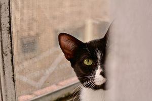 Фото бесплатно черные кошки, кошка, глаза животных