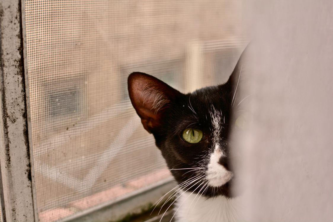 Фото бесплатно черные кошки, кошка, глаза животных - на рабочий стол