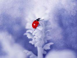 Фото смотреть насекомое, божья коровка бесплатно