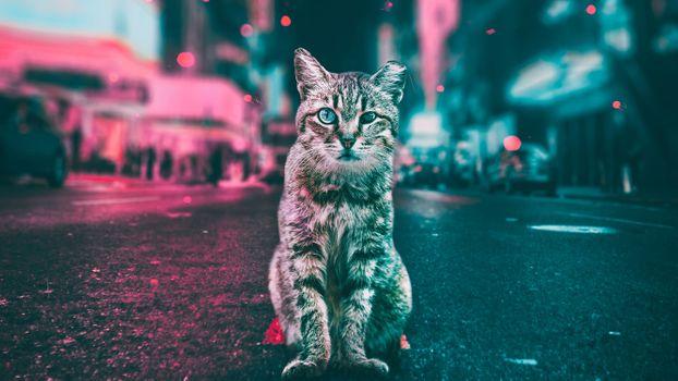 Заставки старый кот, откусанное ухо, слепой на глаз