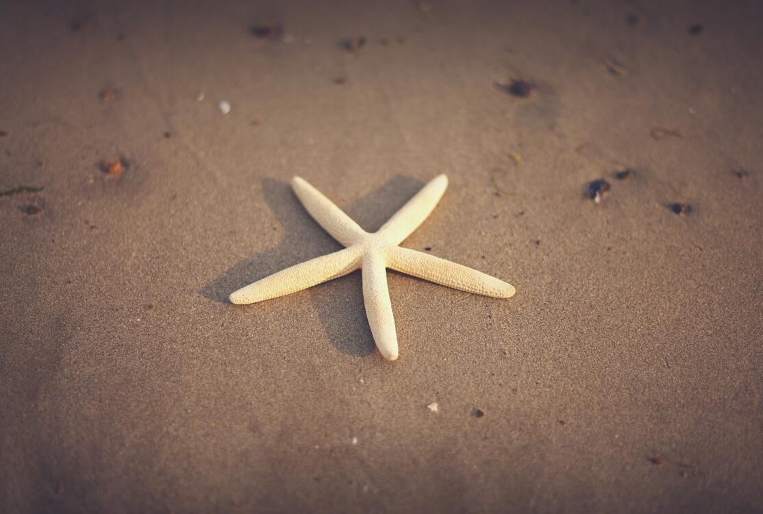 Фото морские беспозвоночные эхинодерма морская звезда - бесплатные картинки на Fonwall