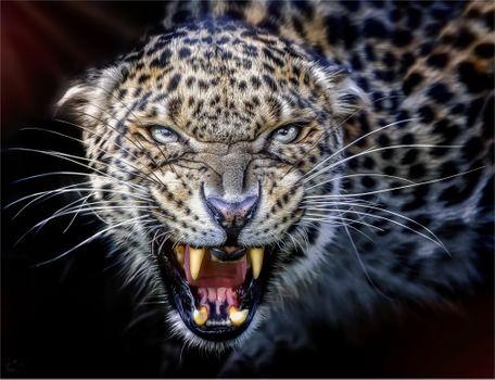 Photo free mouth, leopard, rage