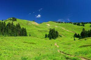 Бесплатные фото поле, холмы, тропинка, деревья, пейзаж