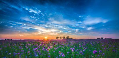 Бесплатные фото закат солнца, поле, цветы, небо, пейзаж
