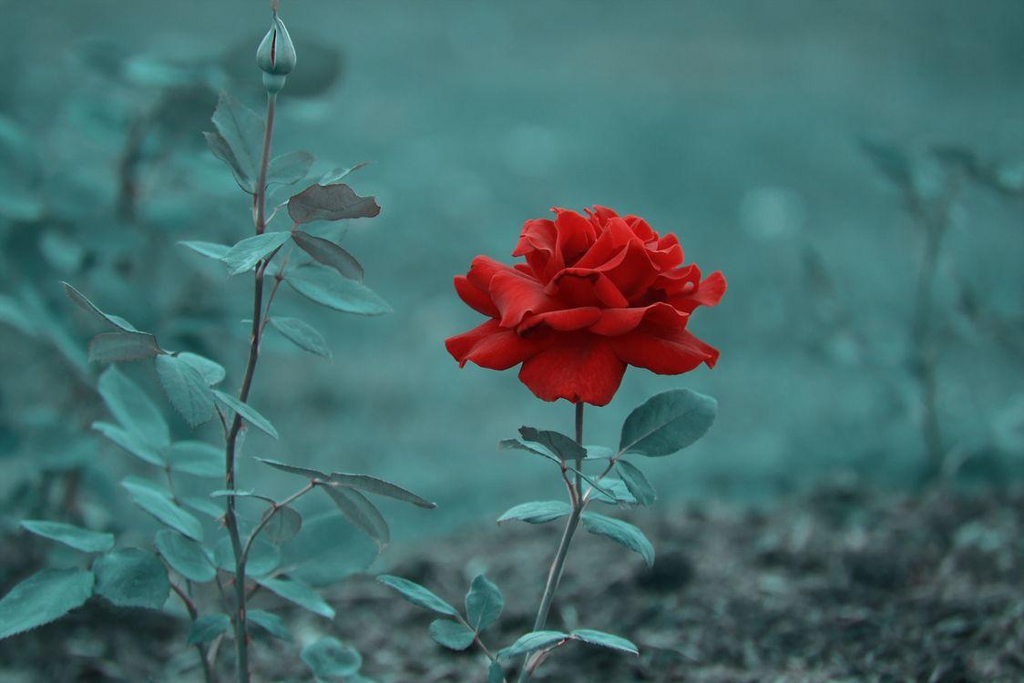 Фото бесплатно Bud, флора, ветка - на рабочий стол