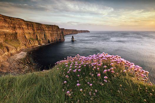 Заставки Скалы Мохер-Баскинга в позднем вечернем солнце,Ирландия,закат,море,берег,цветы,скалы,пейзаж