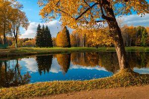 Бесплатные фото Город Павловск,Павловский парк,водоём,осень,деревья,пейзаж