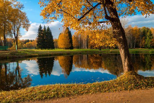 Фото бесплатно Город Павловск, Павловский парк, водоём, осень, деревья, пейзаж