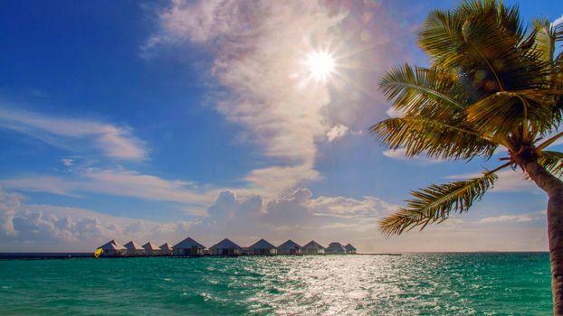 Фото бесплатно тропики, отдых, пальмы