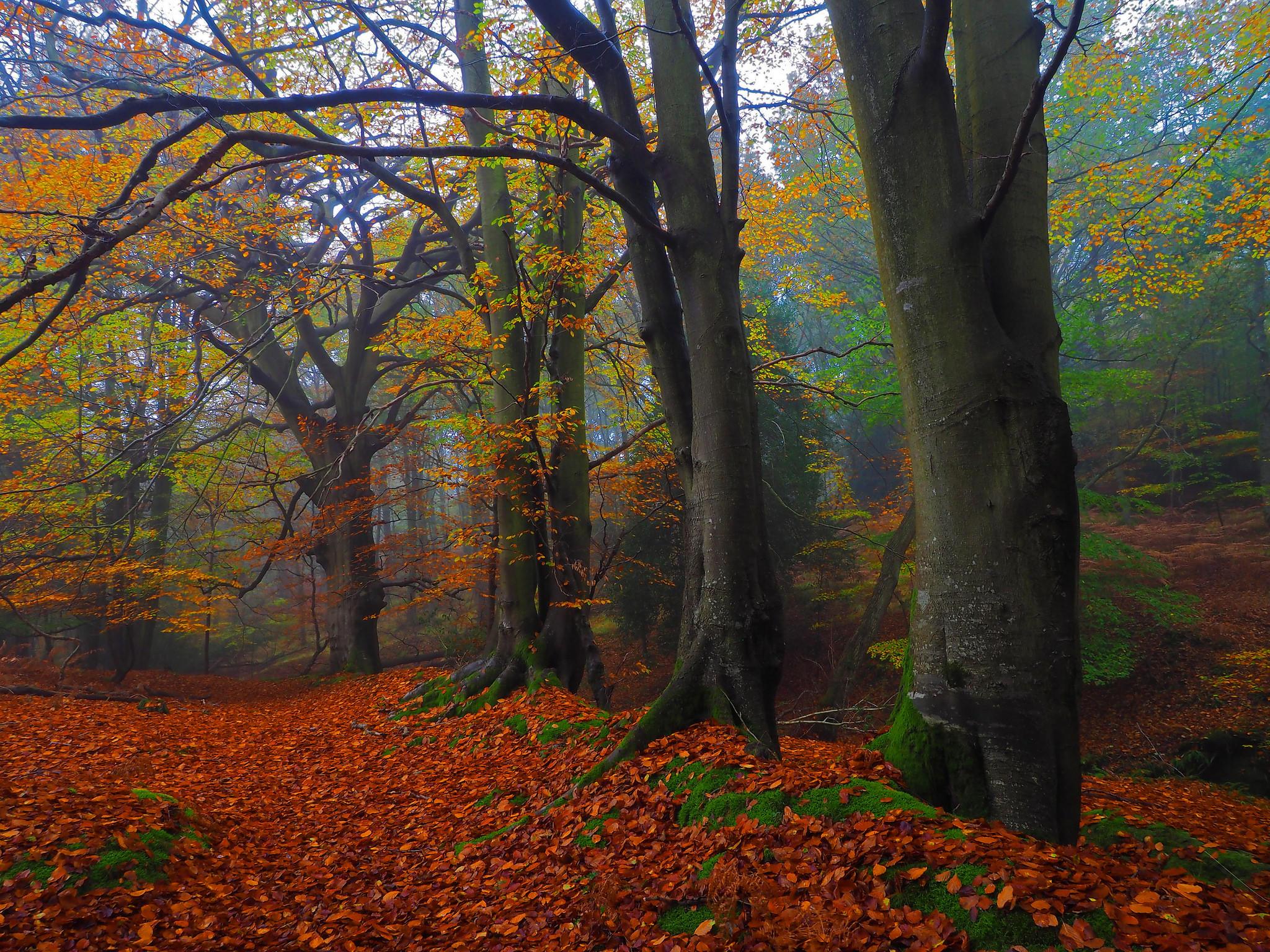 осень, лес, деревья, пейзщаж