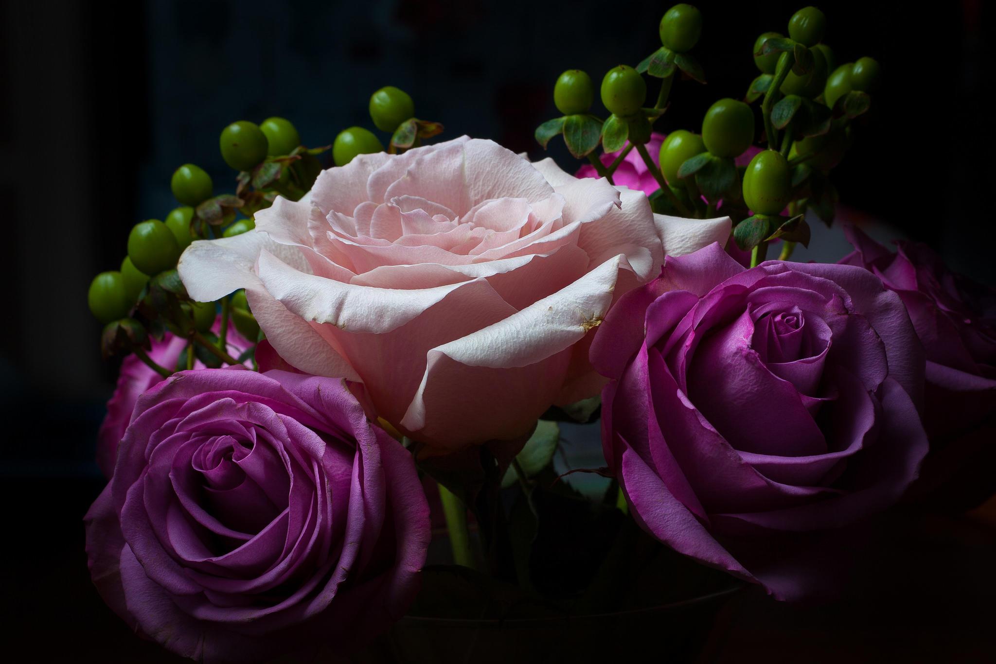Обои роза, розы, цветы, флора